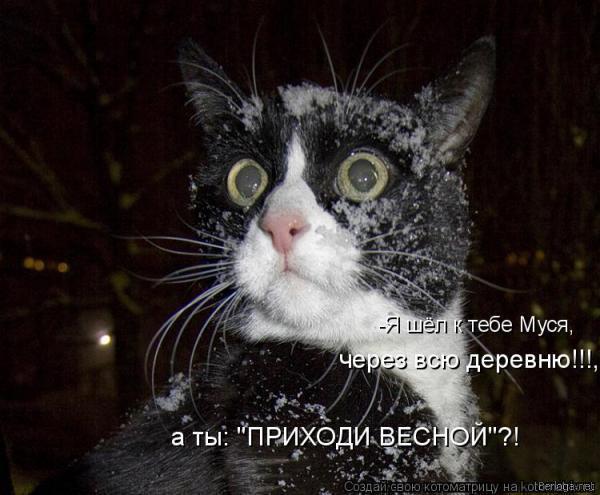 Прикольные картинки кошек с надписями