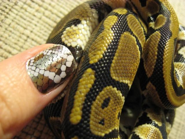 Змеиный маникюр на Новый год