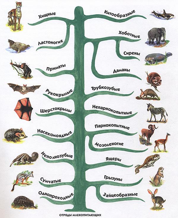 Это не классификация животных,