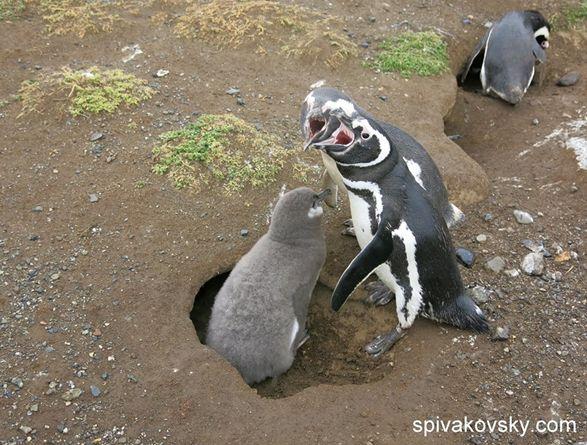 Репортаж №18. Антарктика и пингвины.