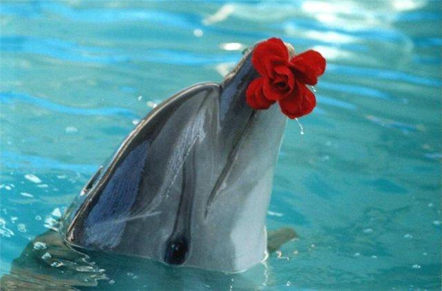 Картинки дельфин с цветами