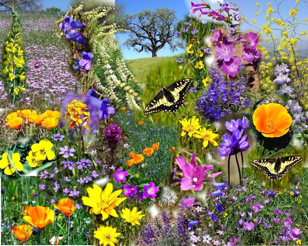 Урок-кейс «Живлення рослин. Фотосинтез»