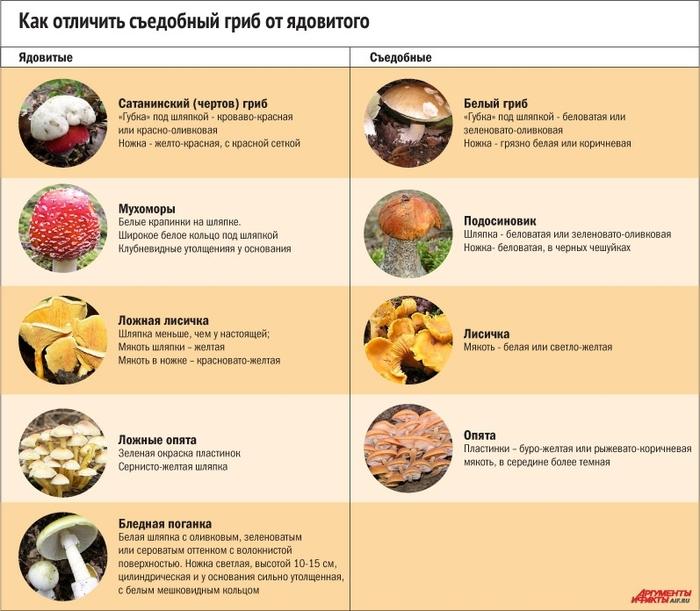 определить холестерин в крови