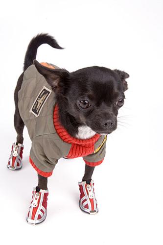 Вязаная одежда для собак своими руками фото 842