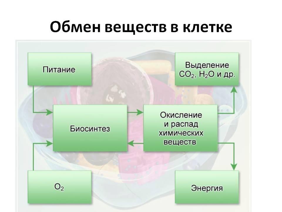 образование диетолога дистанционно