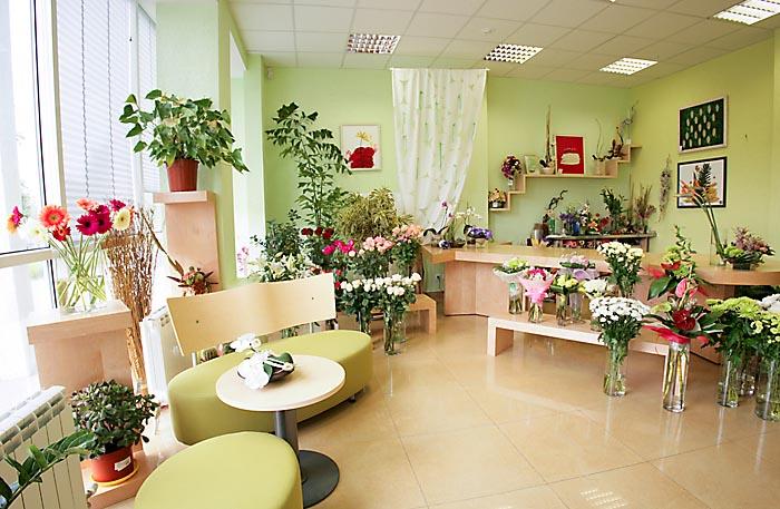 Комнат растения фото