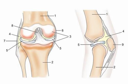 Чем лечить артроз в коленях в домашних условиях
