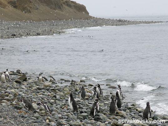 Репортаж №14 из Антарктиды