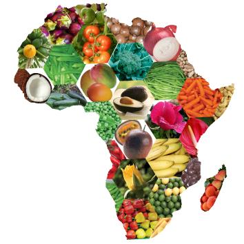 Урок кейс разнообразная африка