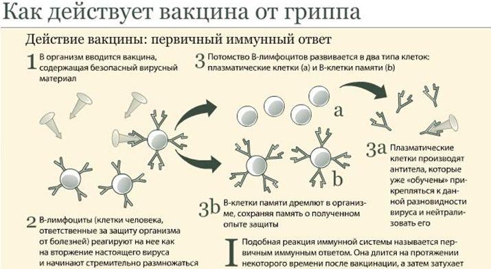 Иммунитет вместо прививки
