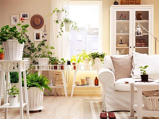 Фото цветов в домашнем интерьере