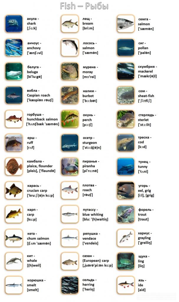 тексты о рыбалке на английском языке