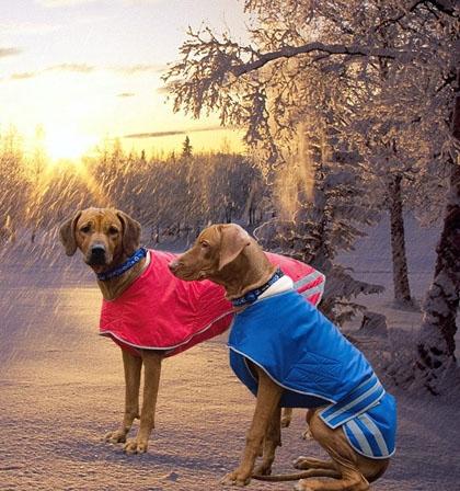 Одежда для щенка своими руками фото