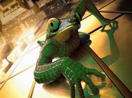 Обмани жабу айфоном