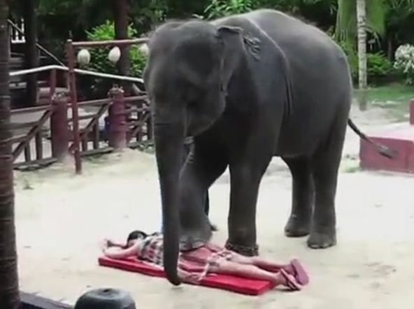 На массаж к слону