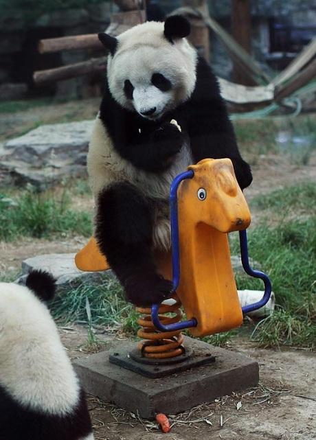 Панды как дети