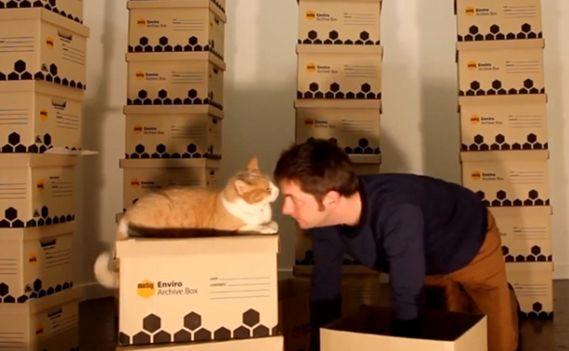Кошачий лабиринт