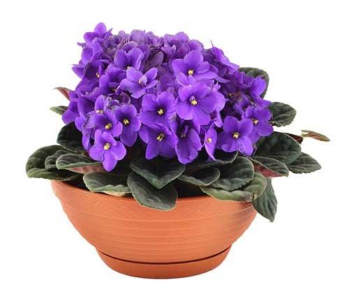 Урок – кейс «Как растения становятся комнатными?»