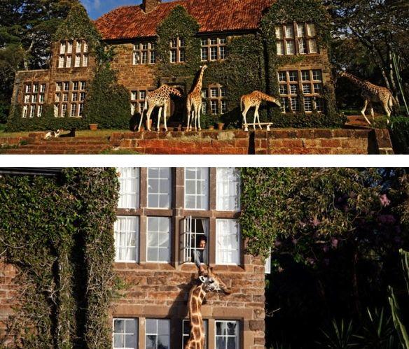 Поживи с жирафом