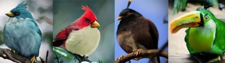 Angry birds ожили