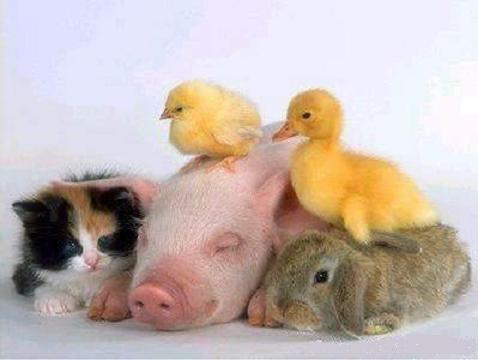 Урок – кейс «Животные-друзья»