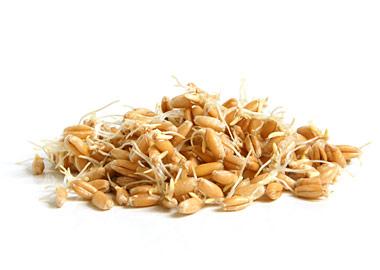 Правильное здоровое питание. Польза от пророщенного зерна.
