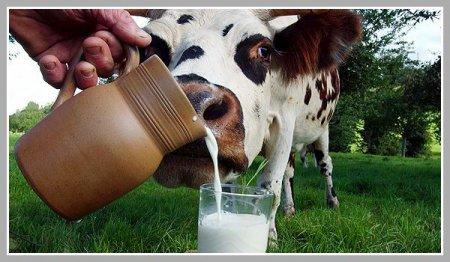 Вы можете похудеть за 5 дней с помощью молочной диеты
