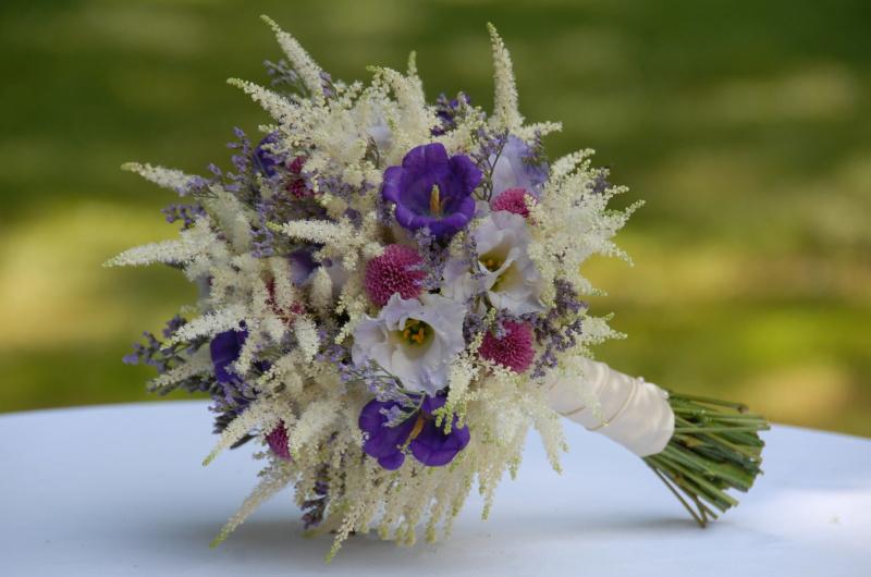 Польові квіти – романтика природи