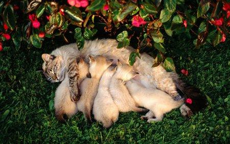 Чим годувати хвостатих: раціон харчування 3-місячне кошеня