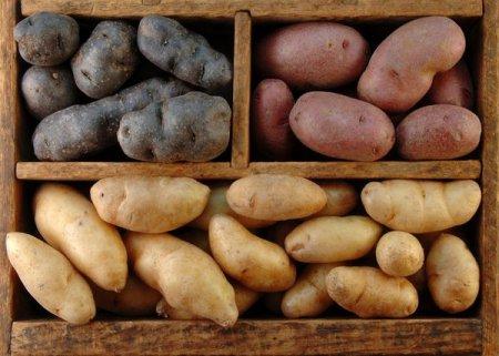 Смачні рецепти з картоплі: здивуйте рідних