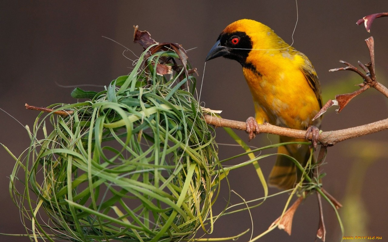 Инстинкт гнездования у будущих мам