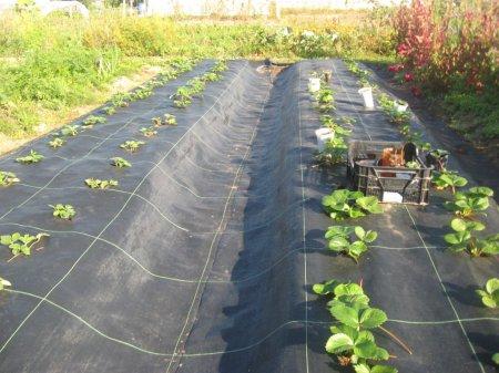 Осень на даче – покупаем агроткань Биотол