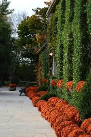 стена из живых цветов Восхищение, восторг, созерцание прекрасного, от которого невозможно оторвать глаз это те чувства, которые посещают вас при виде Вавилонских садов.