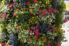 Стена из живых цветов в современном интерьере