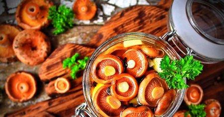 Как готовить грибы: 4 рецепта